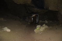 ARN_7243.jpg